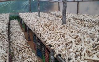 FQTP Ginger Imports